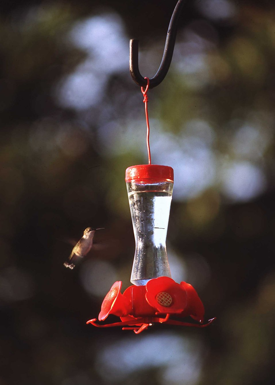 A hummingbird at a feeder