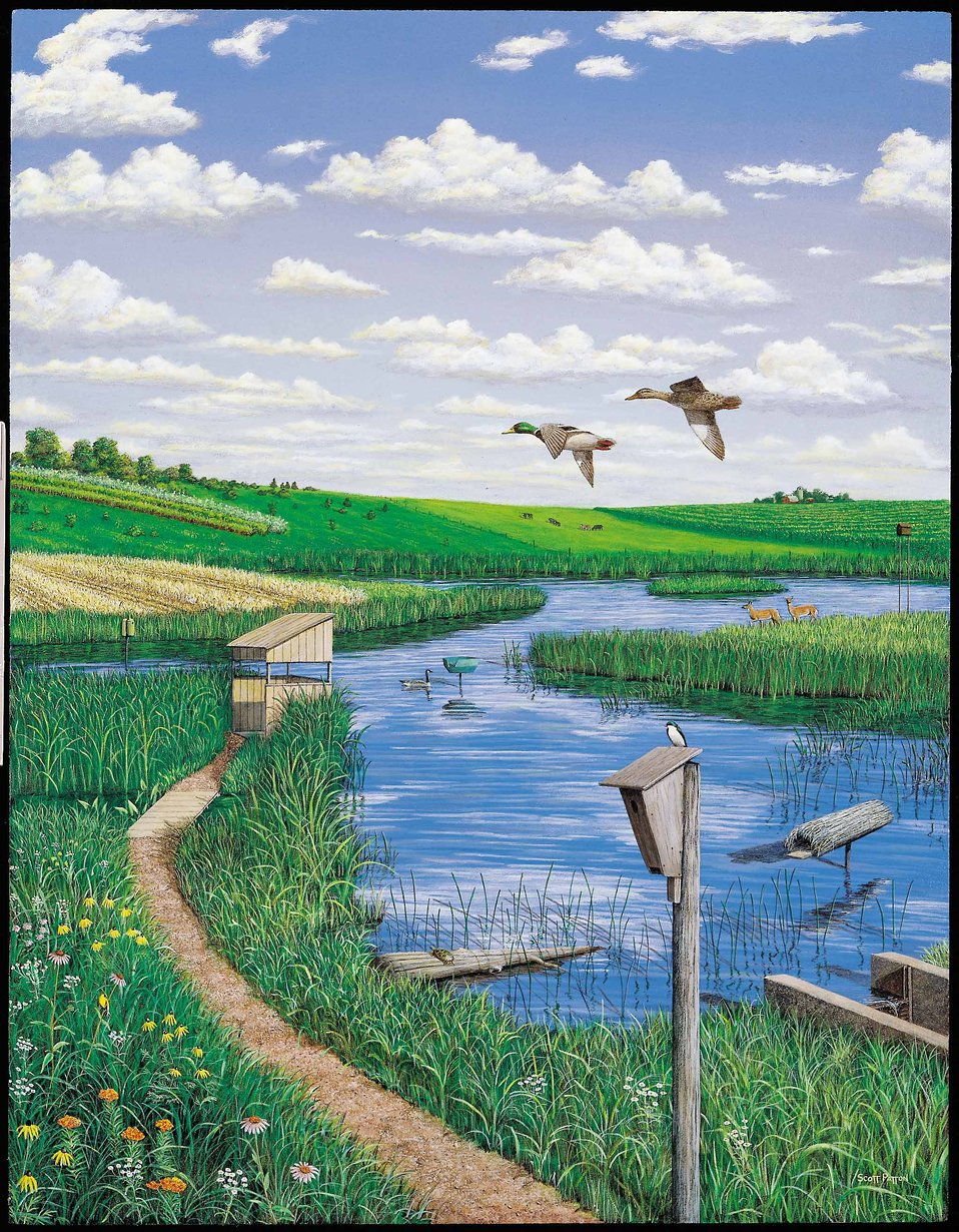 Artist depiction of the numerous enhancements a wetland owner can make to promote more wildlife in a wetland.