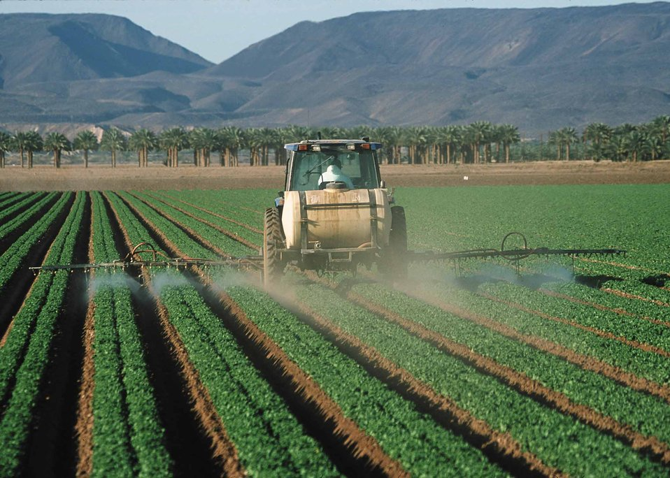 Spraying pesticides on lettuce