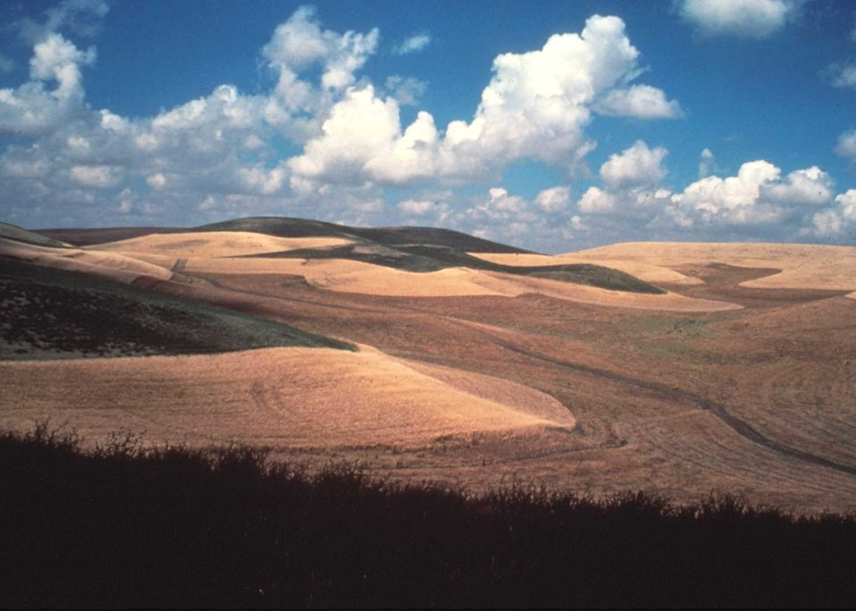 The Palouse region of northern Idaho is noted for production of wheat, barley and dry edible peas and lentils.