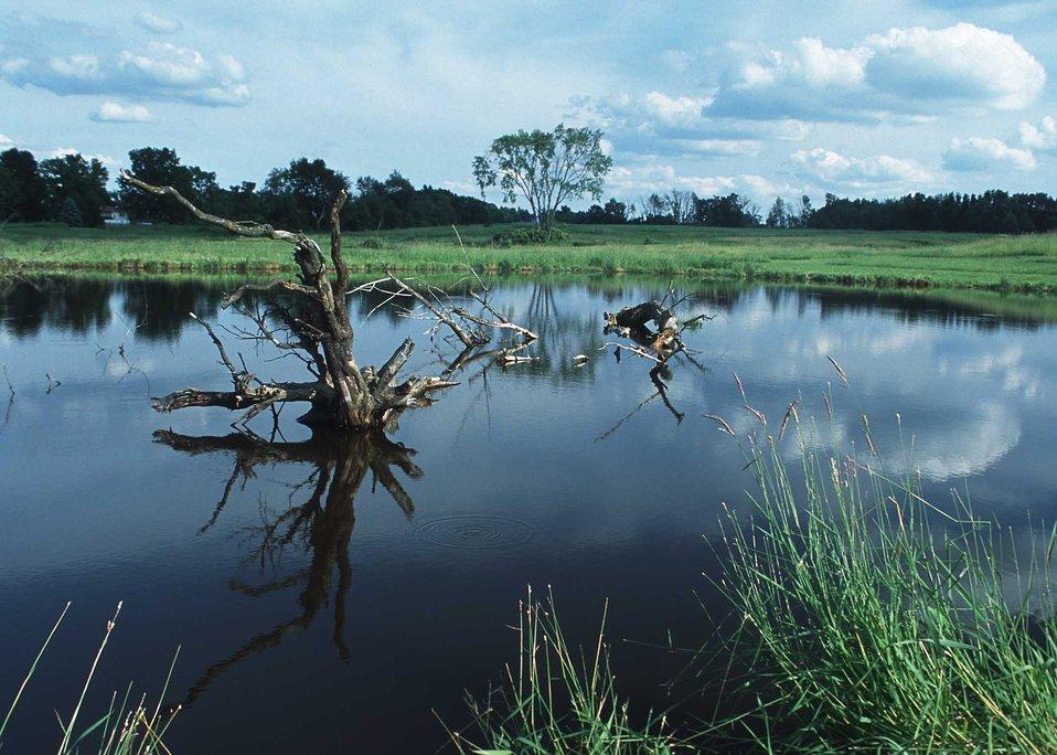 A scenic wetland landscape