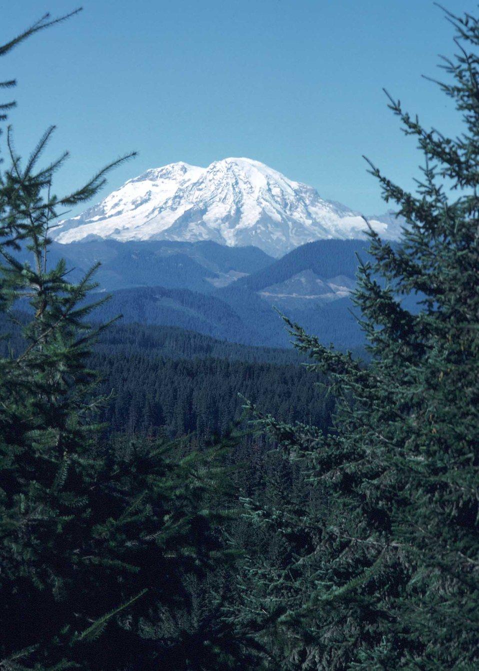 Mt. Rainier landscape