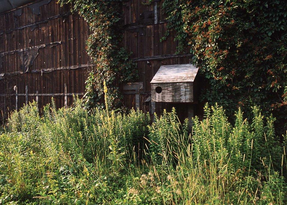 Owl nesting box on an abandoned tobacco barn on the periphery of a warm season grassland habitat restoration project in Hartford County.
