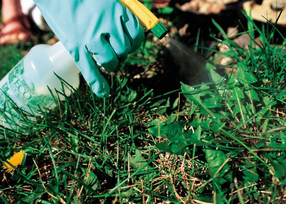 Spot spraying problem weeds is the preferred method of weed control rather than general application of pesticides over the entire yard. Spot