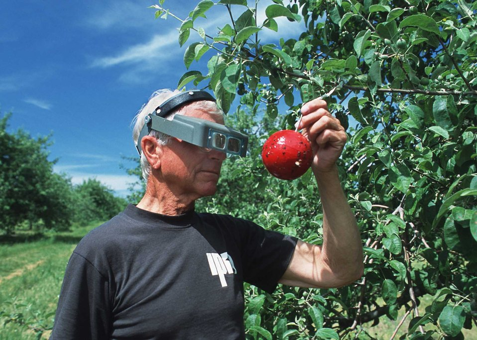 Michigan State University pest management specialist inspecting an apple orchard in Grand Traverse County, Michigan.