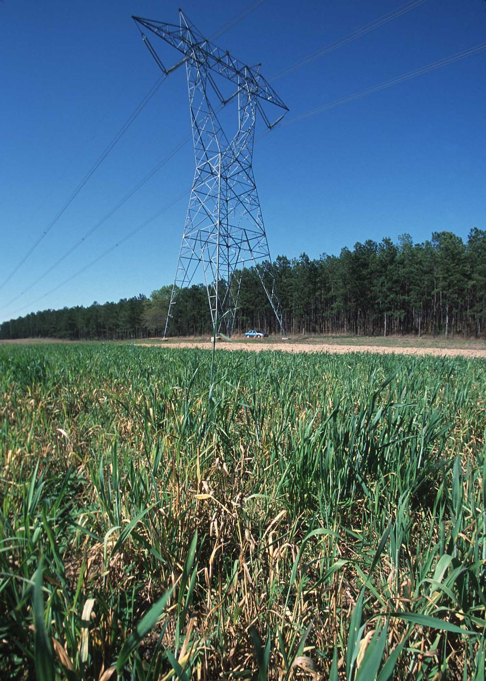 Public Domain Picture | Project Wings foodplots of wheat