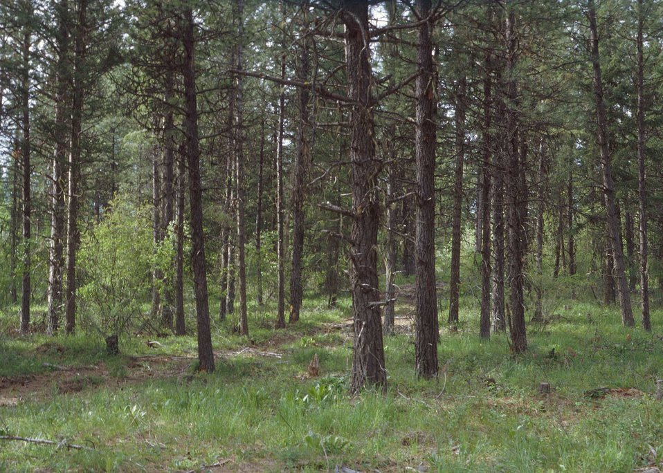 Forest stand improvement involves cutting or killing selected trees and understory vegetation to improve tree stands.