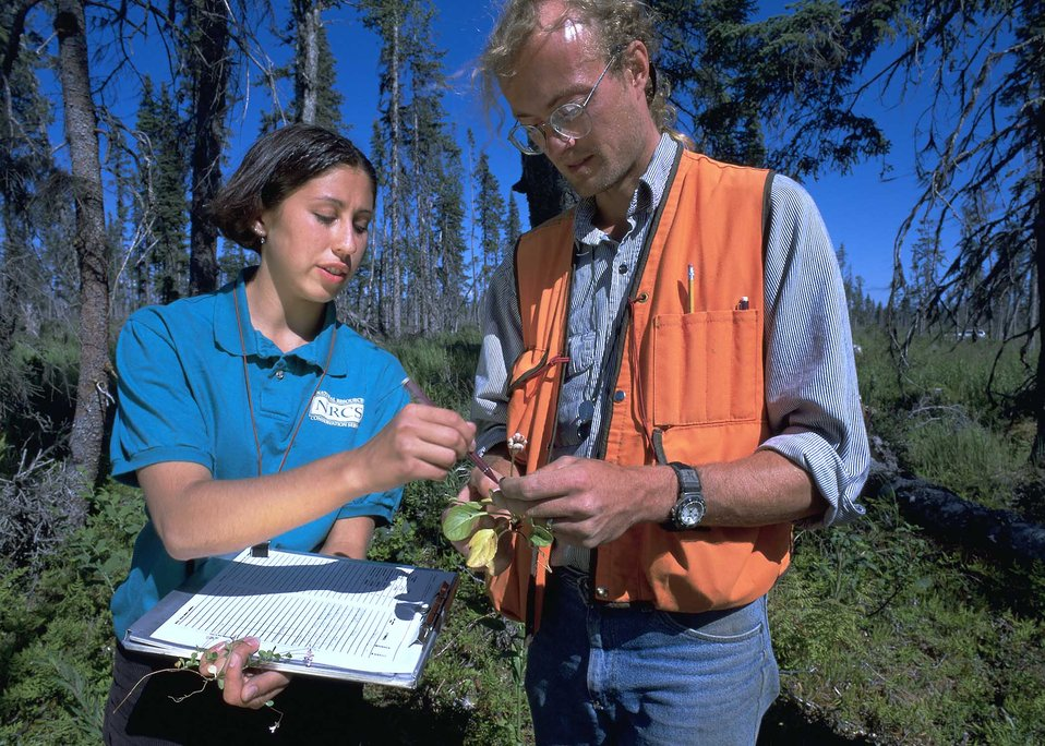 Crystal Poindexter and Mike Gracz identify plant species for an inventory on Native Alaska lands near Homer, AK.