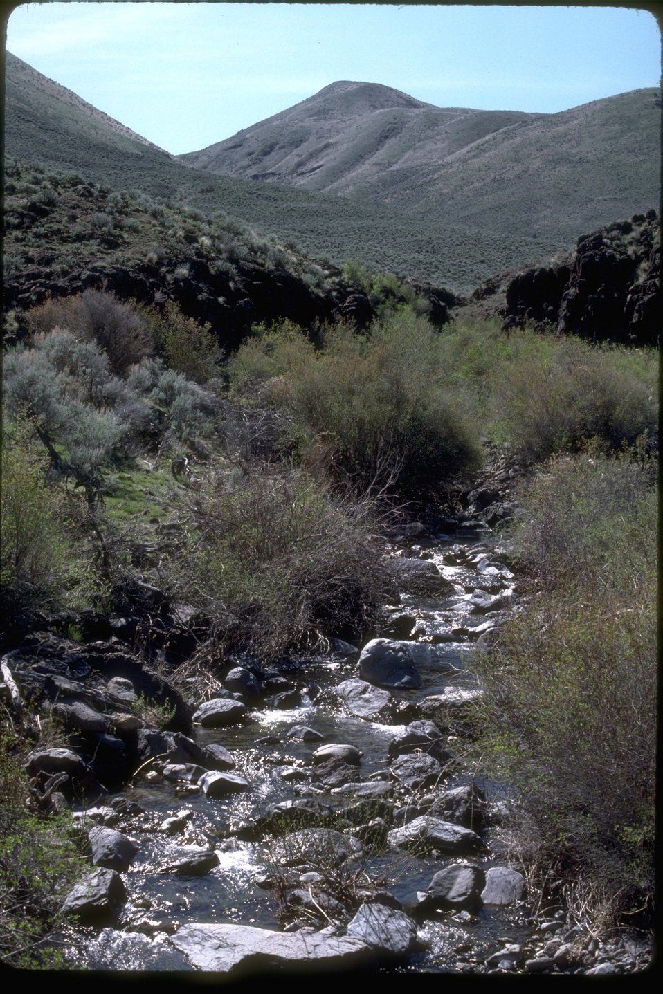 Riparian area willows along the banks of Gold Creek.  OR 3-33