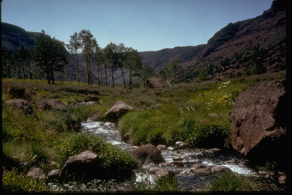 A scenic picture of a stream in one of the gorges.