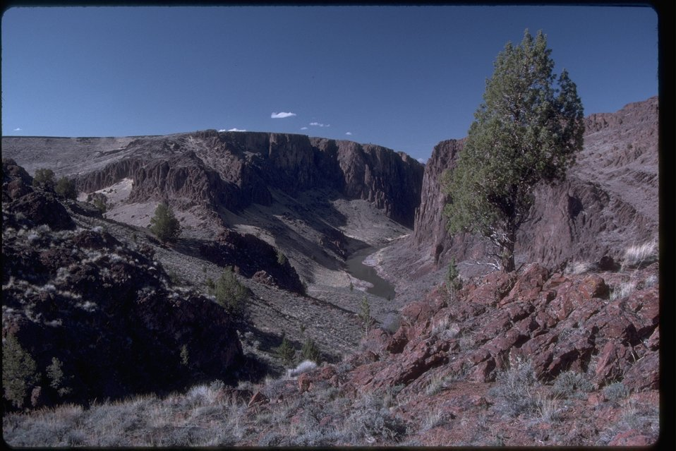 View of the rim rock of Owyhee Canyon with one tree in the foreground.  OR 3-195