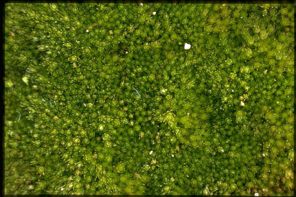 Closeup shot of Moss.