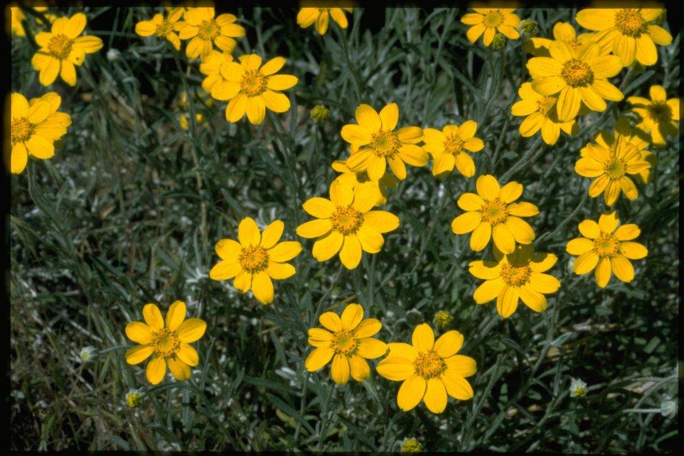 Closeup shot of Asteraceae.