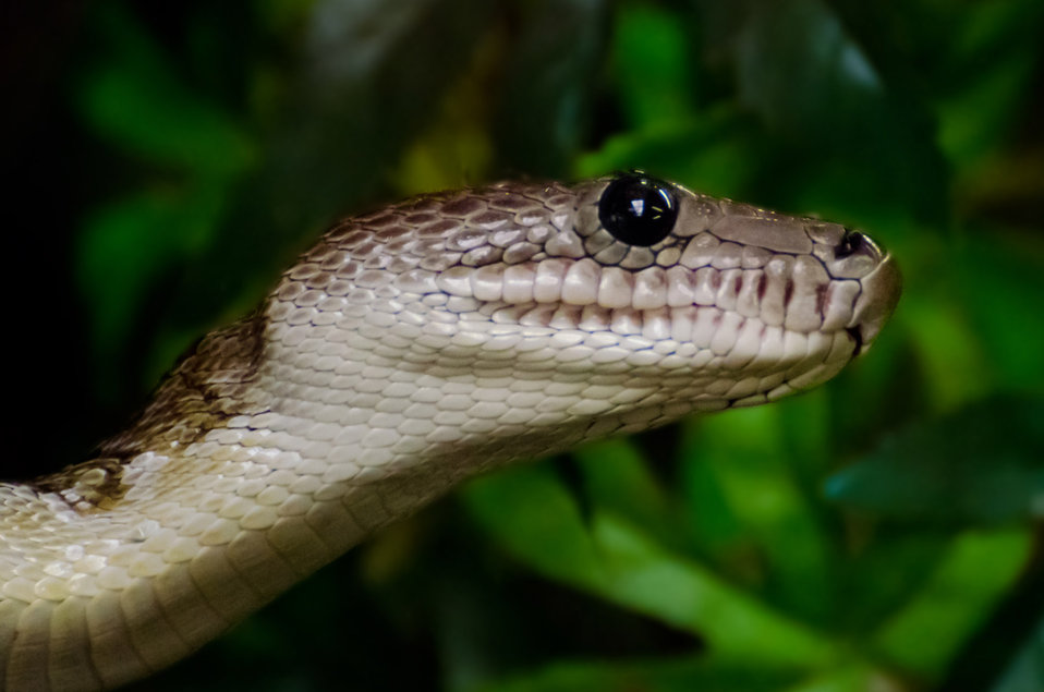 Snake - animals