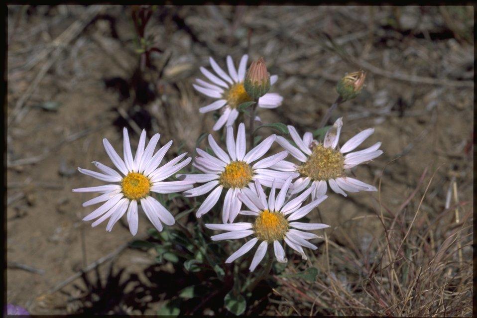 Medium shot of Asteraceae.