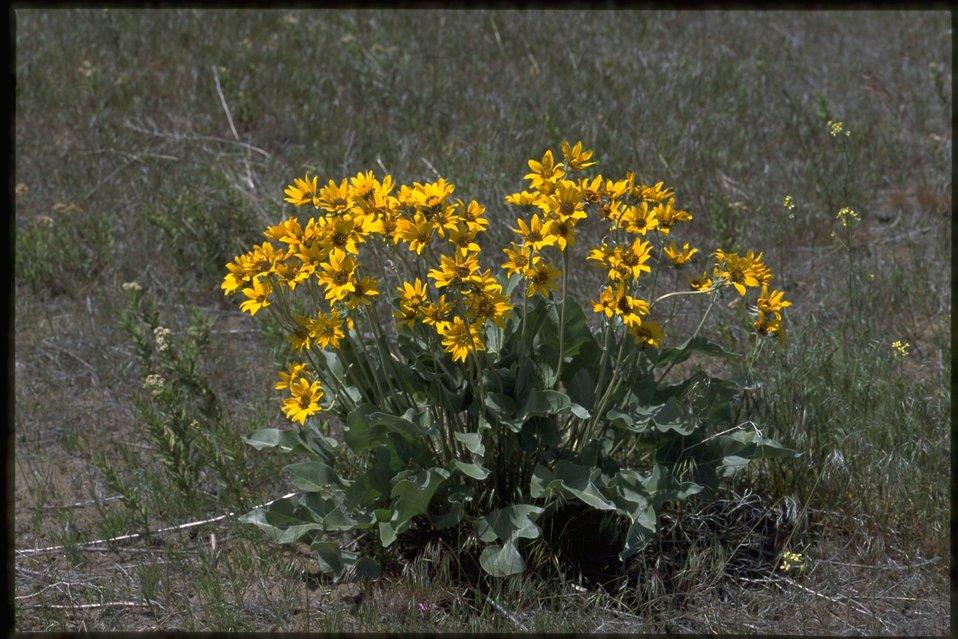 Farshot of Asteraceae.