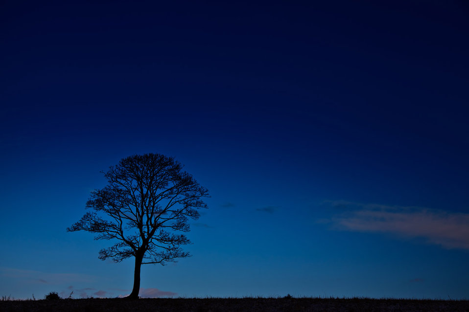 Tree silhouette at night
