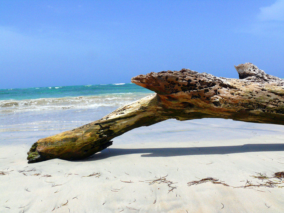 Wood on the beach