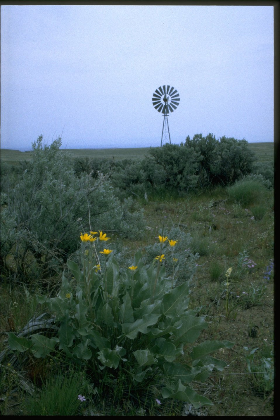 Wind Mill with Balsam wildflowers in foreground.