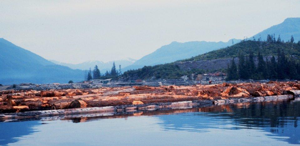 Log raft at Hobart Bay on east side of Stephens Passage