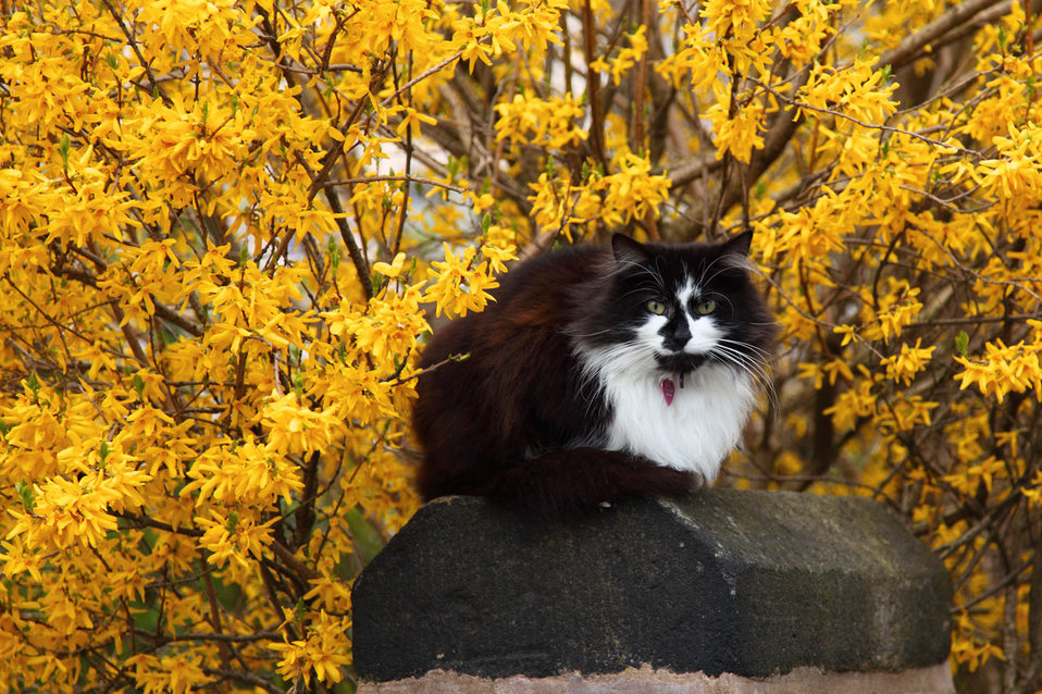 Cat with yellow flowers