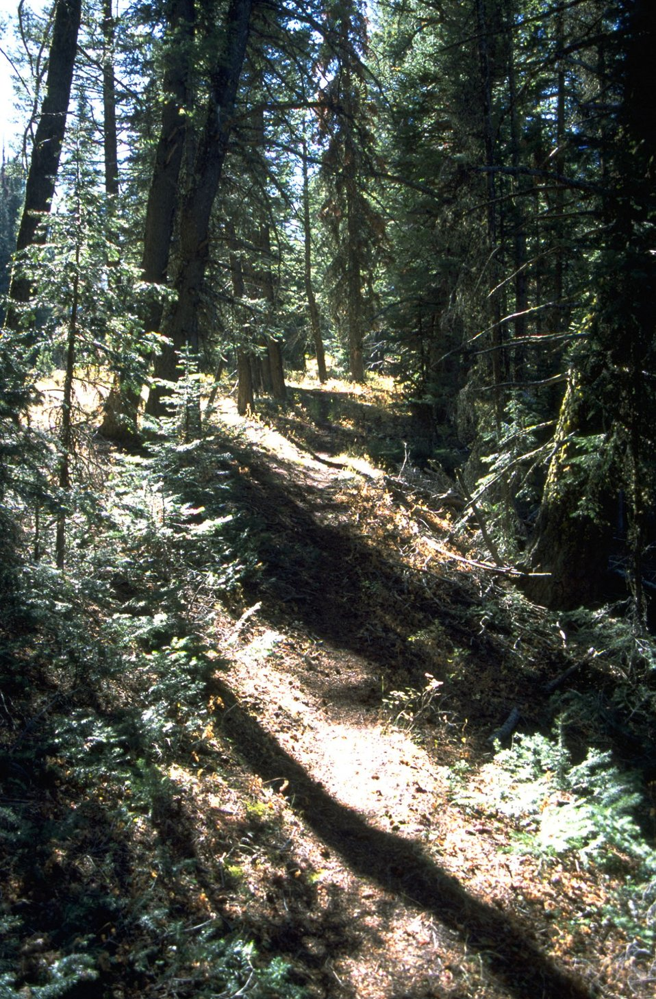 Trail in forested area