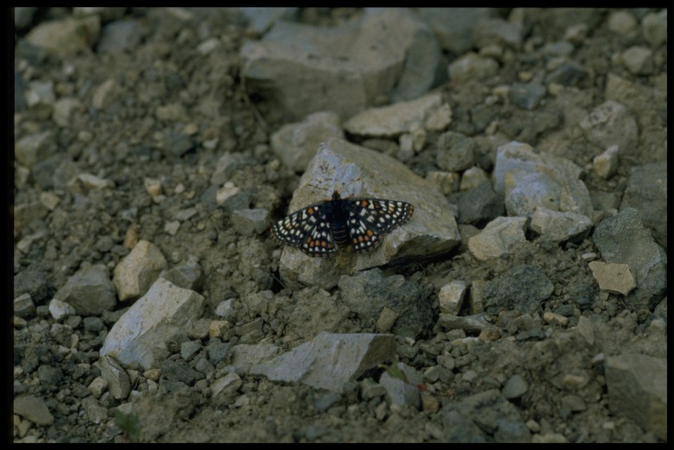 Unidentified moth or butterfly.