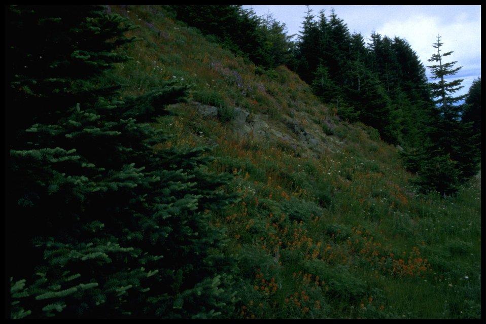 Wide shot of rock garden atop Mary's Peak.