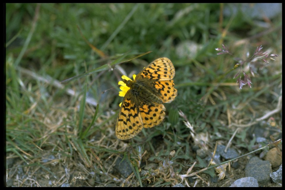 Medium shot of butterfly and wildflower.