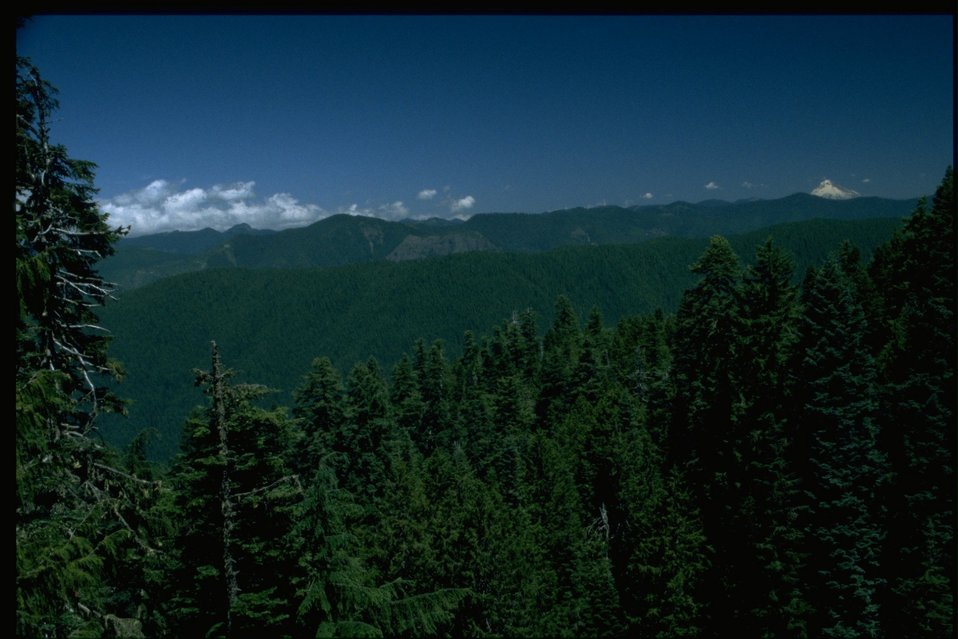 Scenic view from Mt. Horeb, Mt. Hood in the distance.