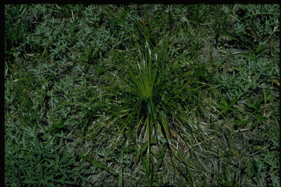 Medium shot of vegetation.