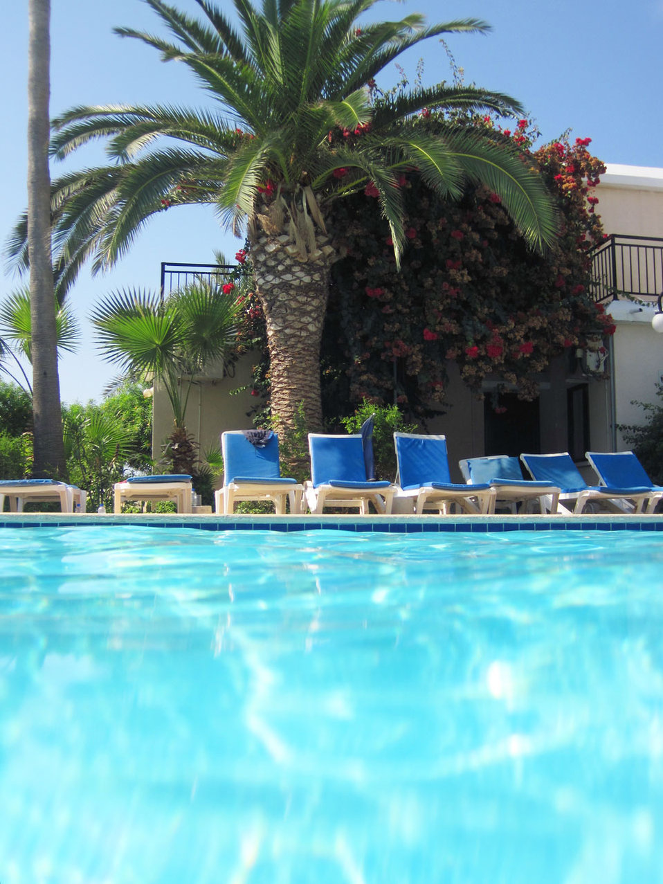 Sunbed pool and palm