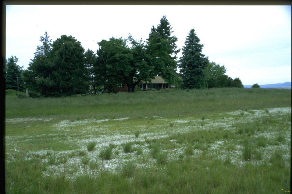 View of West Eugene Wetlands Administration building across meadow.