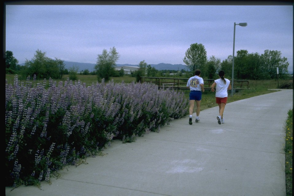 Two joggers running past lupine wildflowers.