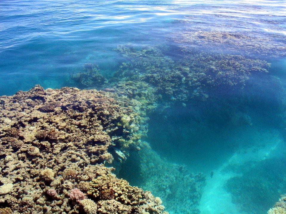 Shallow reef scene.