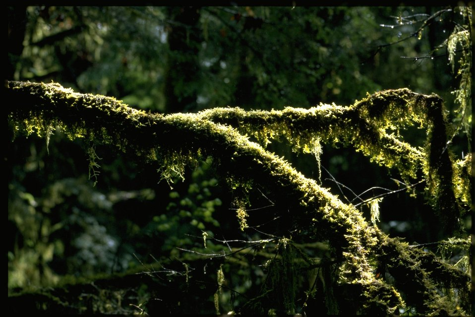 Farshot of Bryophytic epiphytes.