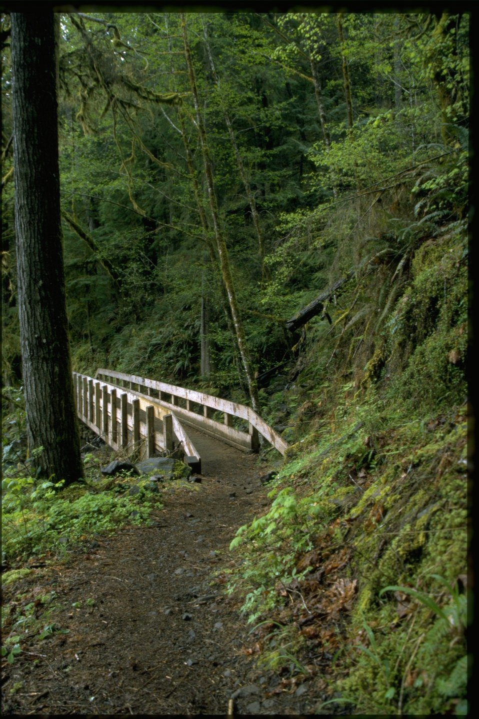 Trail leading to bridge in Swiftwater area.