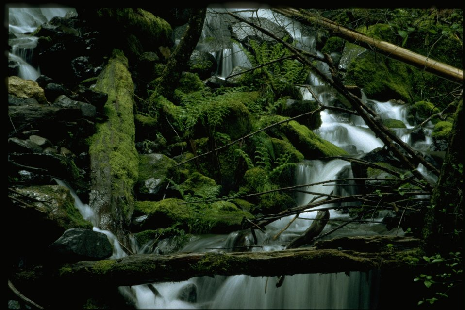 Swiftwater stream.
