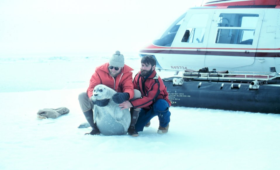 Helicopter transport for scientists during seal tagging operations. A not pleased bearded seal pup - Erignathus barbatus - restrained for tagging. Lieutenant Commander Bill Turnbull on left, Budd Christman on right.