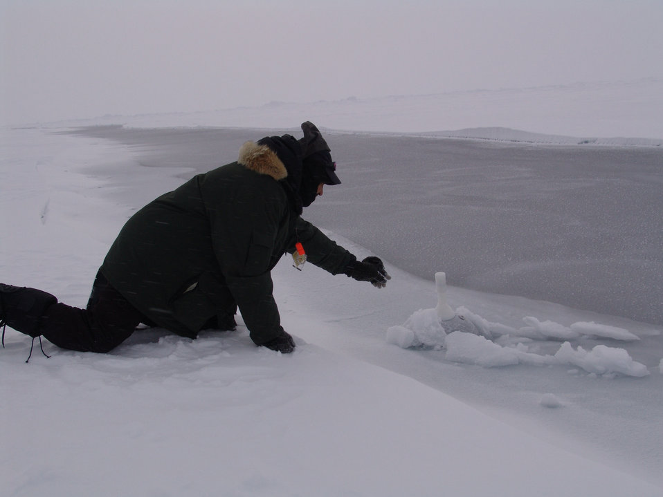 Dr. Pablo Clemente-Colon carefully retrieving an SVP-BT buoy in newly frozen ice  in a lead.  This requires extreme caution as the ice is very thin and there is 1500 meters of very cold water below the ice.