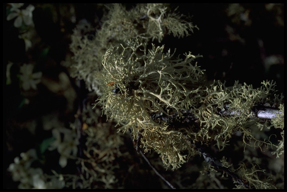 Medium shot of Lichen.