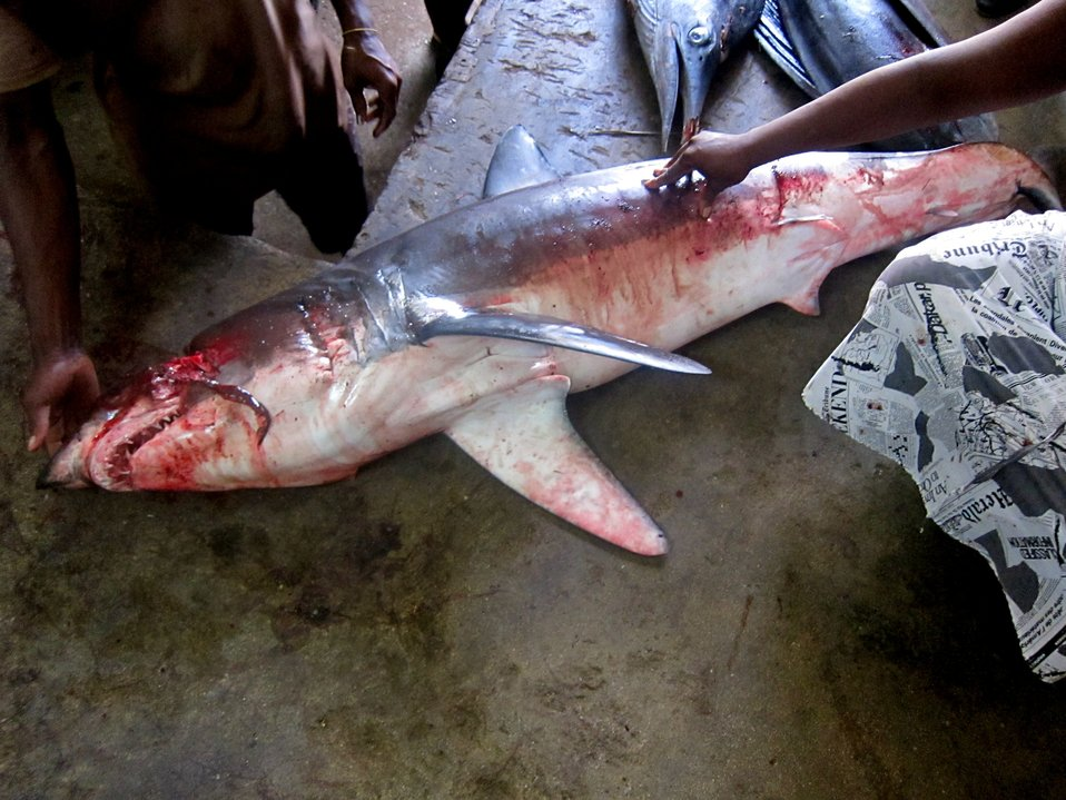 Shark being prepared for Sao Tomean market