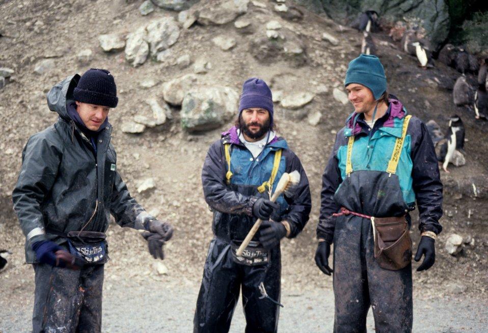 Biologists Brian Walker, Mike Schwartz and William Meyer prepare to weigh penguin chicks, Seal Island.