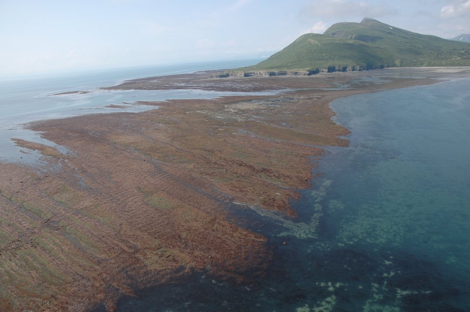 Aerial photograph. Tignavik Point on Ursus Cove.  At low tide the extent of land extends far offshore from the high-tide line.  Brownish-red algae covered rock is seen in the foreground.