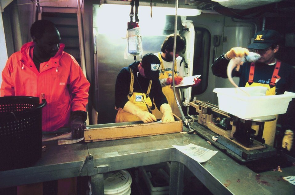 Scientist weighing and measuring fish on the MILLER FREEMAN