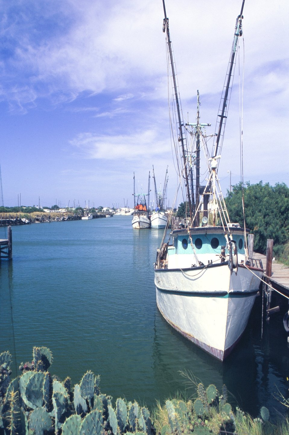A view of the harbor at Port Isabel, Texas.  Cactus and shrimp boats, an incongruous combination.