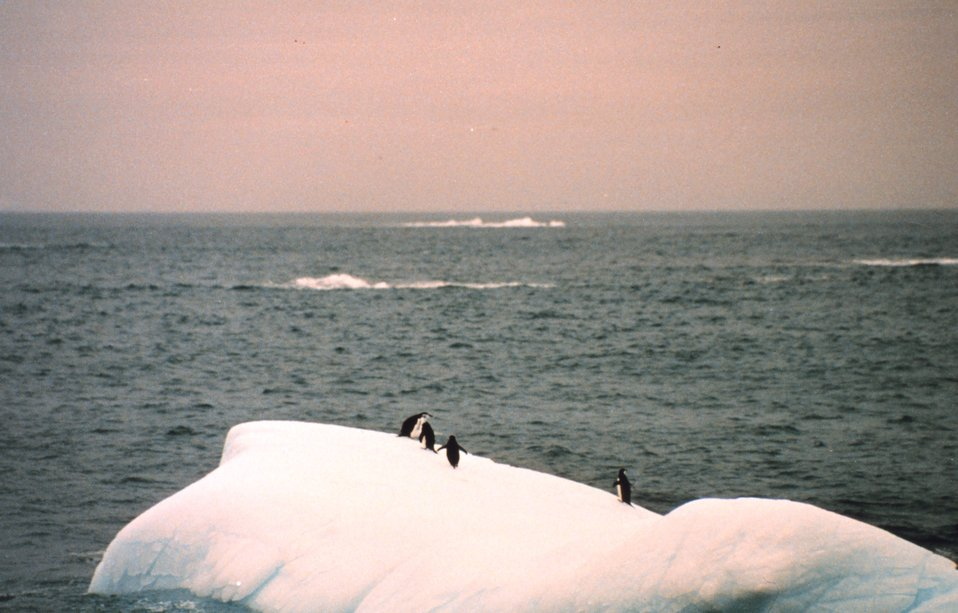 Adelie penguins on a small iceberg off the Antarctic Peninsula.