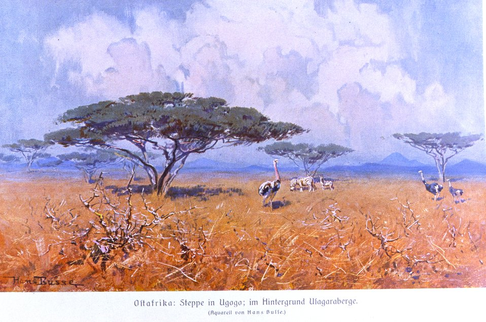 Steppes of German East Africa with ostriches. In: 'Das Deutsche Kolonialreich,' by Hans Meyer, 1909.  Vol I, p. 264. Library Call Number: Cfd M612 d