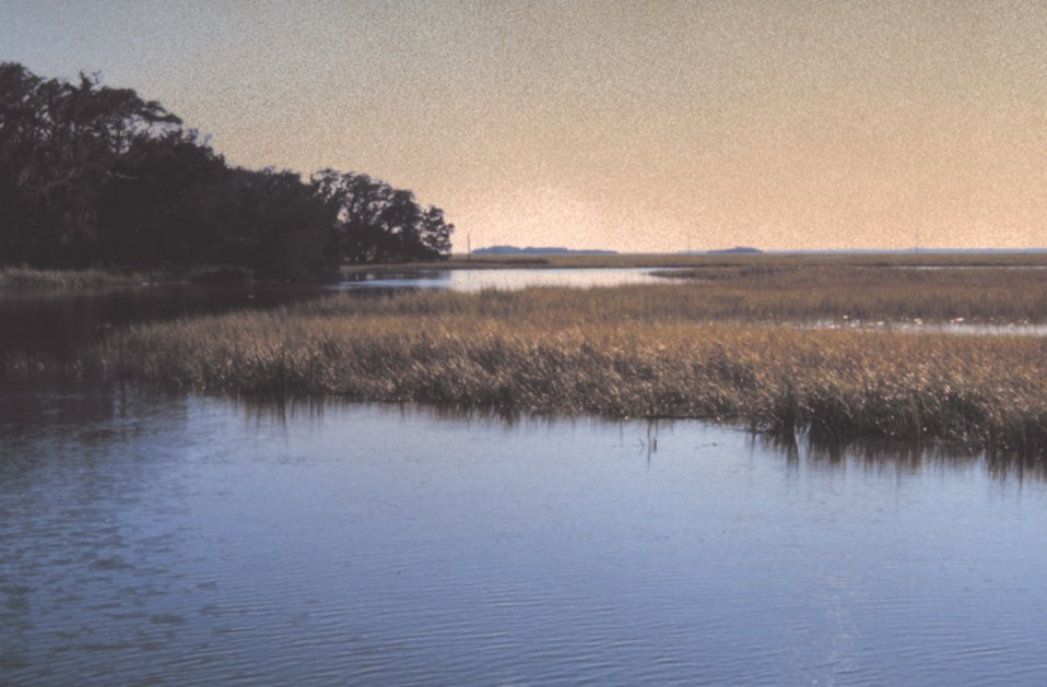 Salt marsh at high tide, at the south end of Sapelo Island. Though Georgia's coast is only about 100 miles long, about 1/3 of all salt marsh on the East Coast of the U. S. is found here.