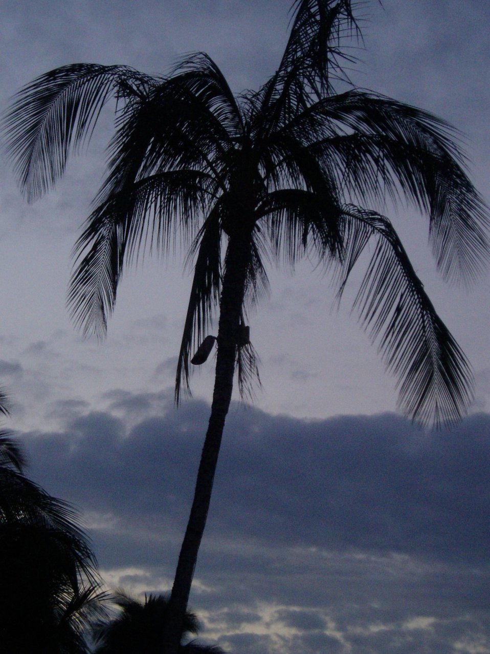 A palm tree silhouetted at dusk.